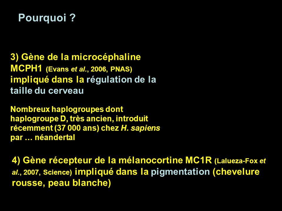 Pourquoi 3) Gène de la microcéphaline MCPH1 (Evans et al., 2006, PNAS) impliqué dans la régulation de la taille du cerveau.