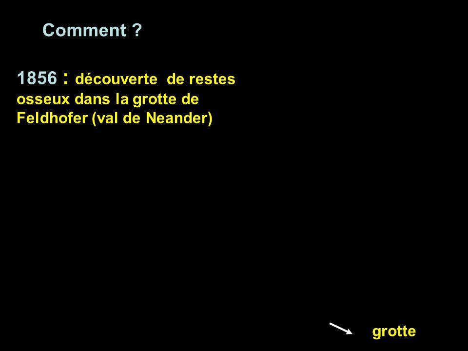 Comment 1856 : découverte de restes osseux dans la grotte de Feldhofer (val de Neander) grotte