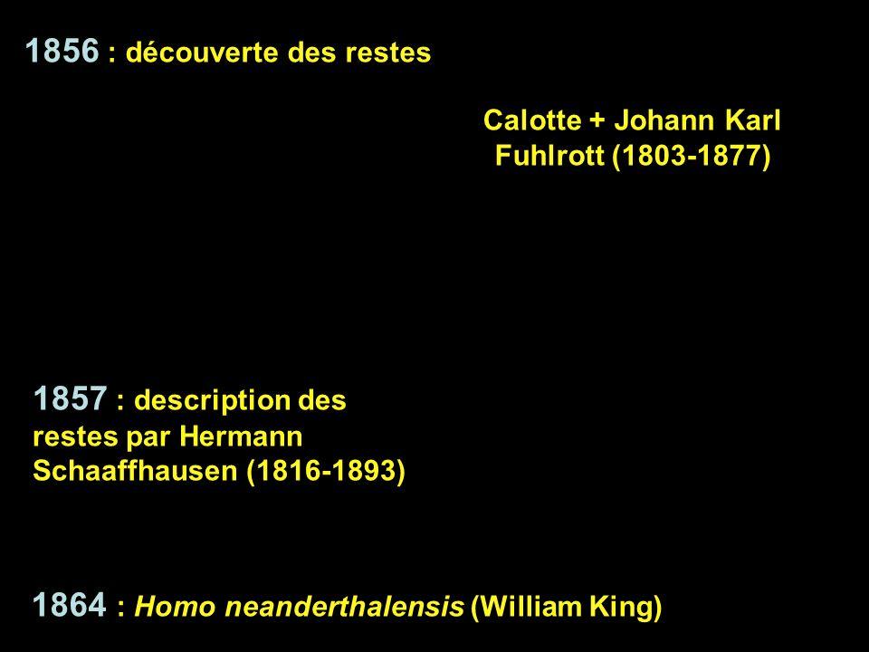 Calotte + Johann Karl Fuhlrott (1803-1877)