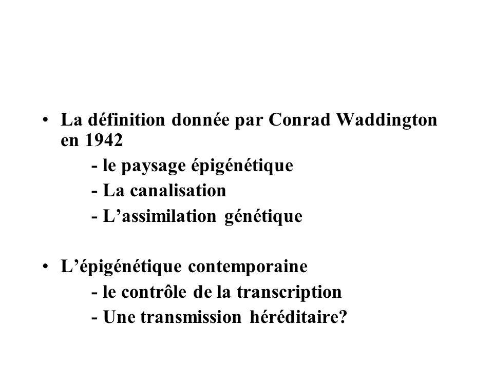 La définition donnée par Conrad Waddington en 1942