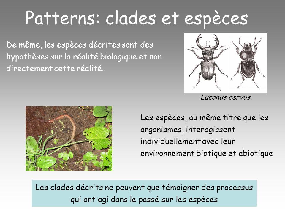Patterns: clades et espèces