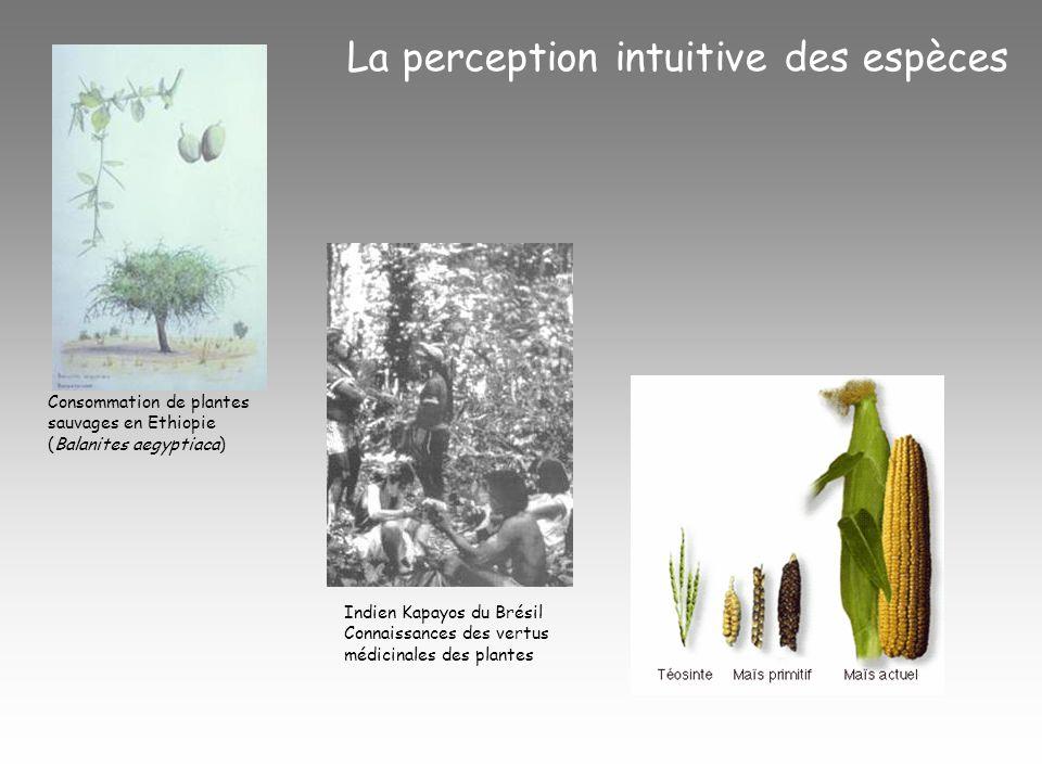 La perception intuitive des espèces