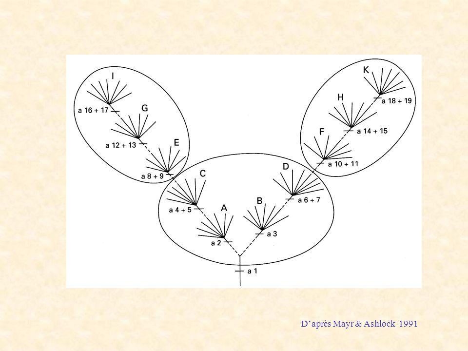Mayr Ashlock figure 1991 D'après Mayr & Ashlock 1991