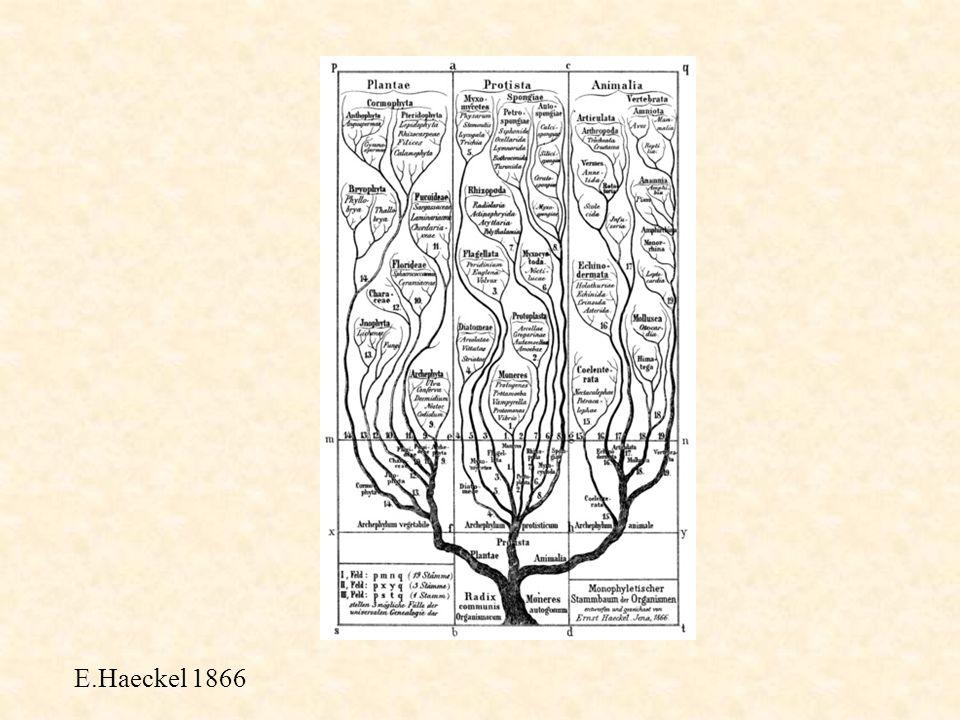 Haeckel et la monophylie