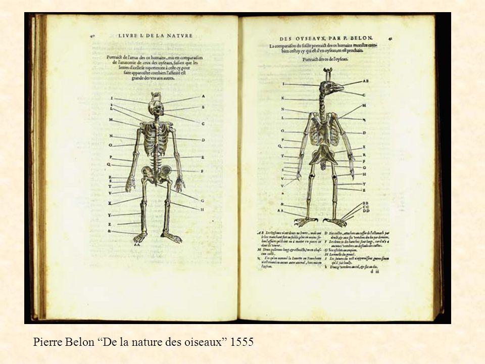 Pierre Belon De la nature des oiseaux 1555