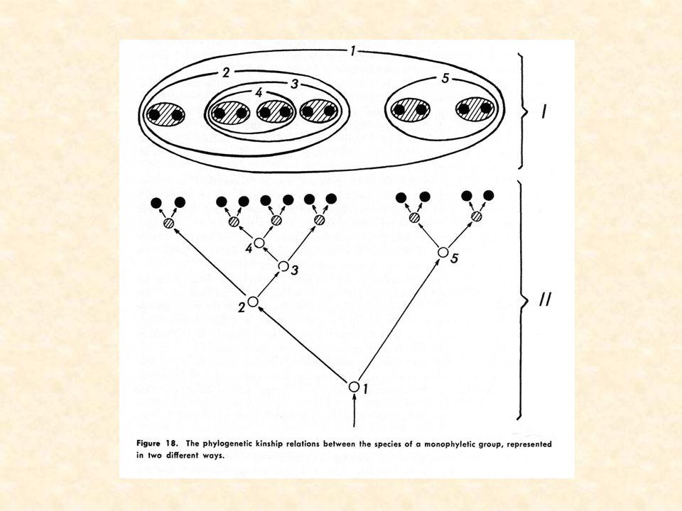 Hennig groupes monophylétiques