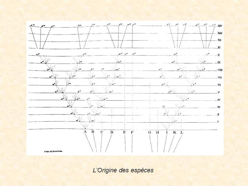 Image Darwin seule L'Origine des espèces