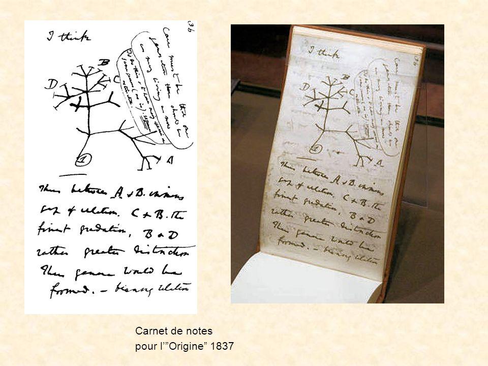 Le premier schéma Carnet de notes pour l' Origine 1837