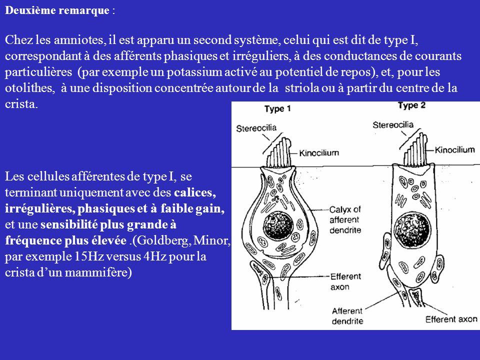 Deuxième remarque : Chez les amniotes, il est apparu un second système, celui qui est dit de type I,