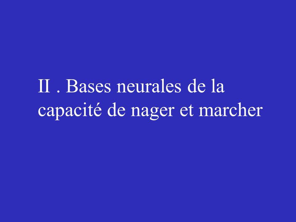 II . Bases neurales de la capacité de nager et marcher