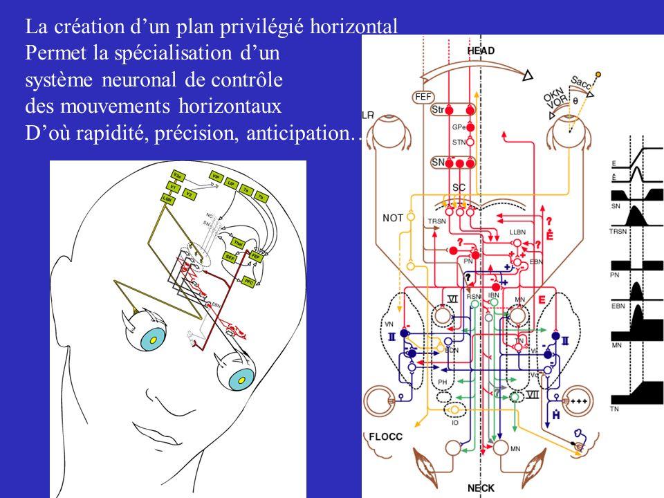 La création d'un plan privilégié horizontal