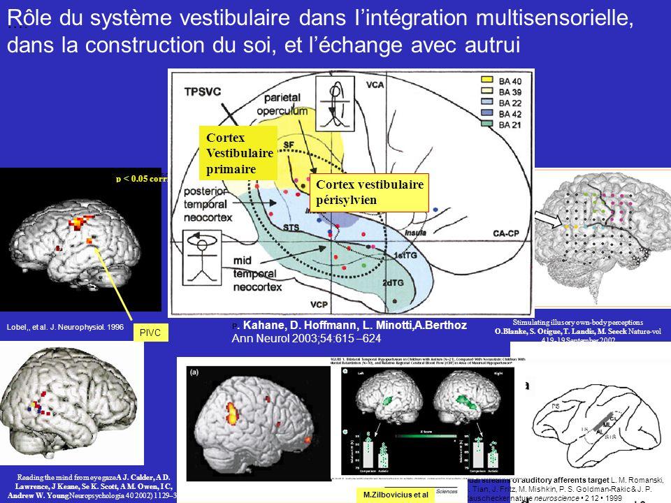 Rôle du système vestibulaire dans I'intégration multisensorielle,