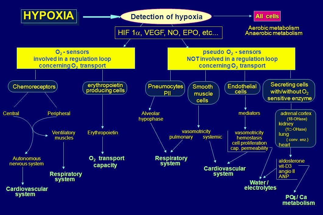 HYPOXIA Detection of hypoxia HIF 1, VEGF, NO, EPO, etc... All cells