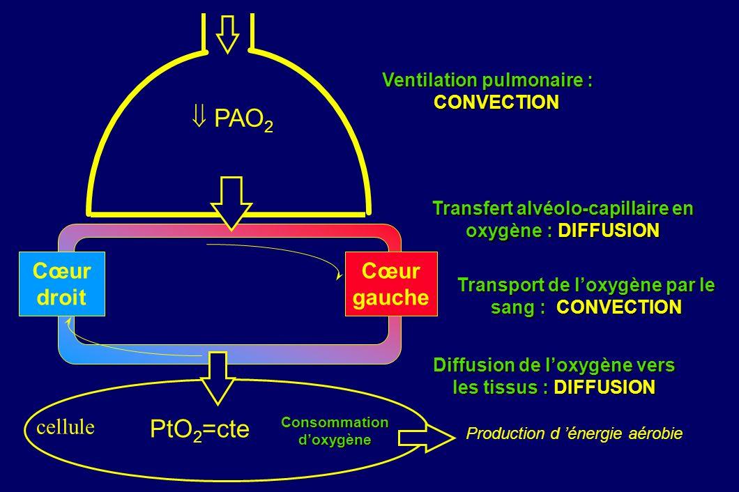  PAO2 PtO2=cte Cœur droit Cœur gauche cellule