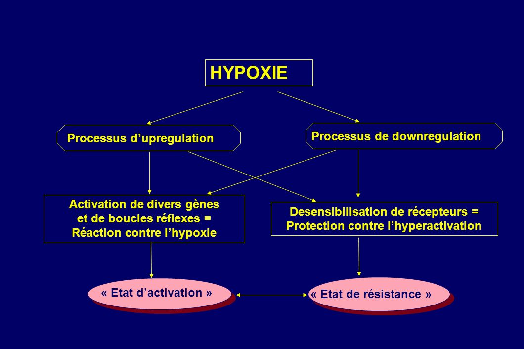 HYPOXIE Activation de divers gènes et de boucles réflexes =