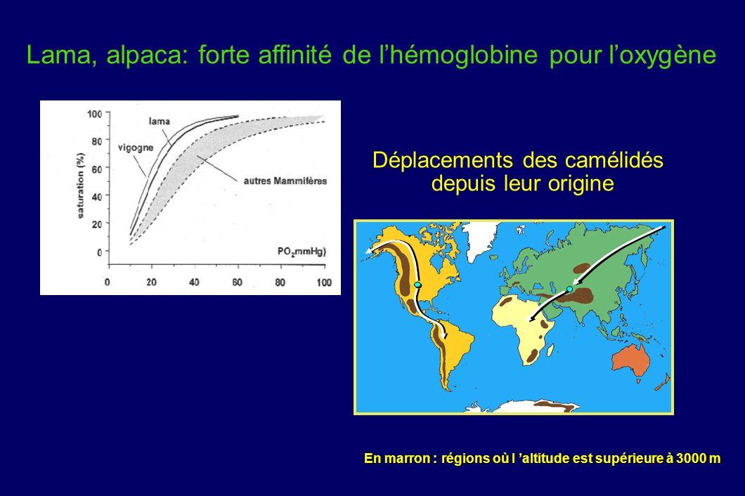 Déplacements des camélidés depuis leur origine
