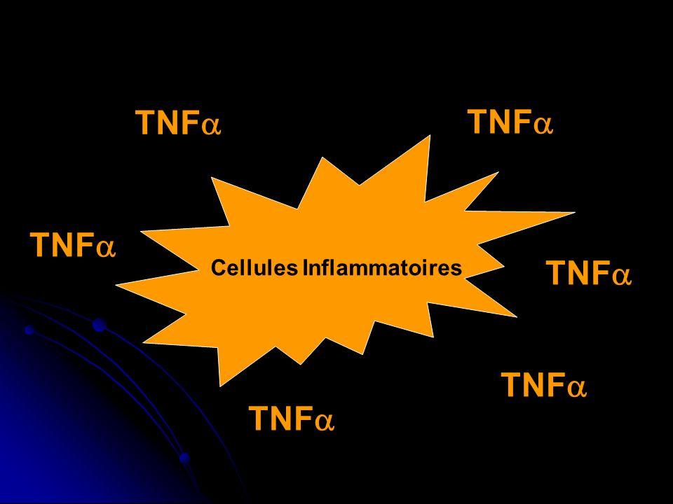 Cellules Inflammatoires