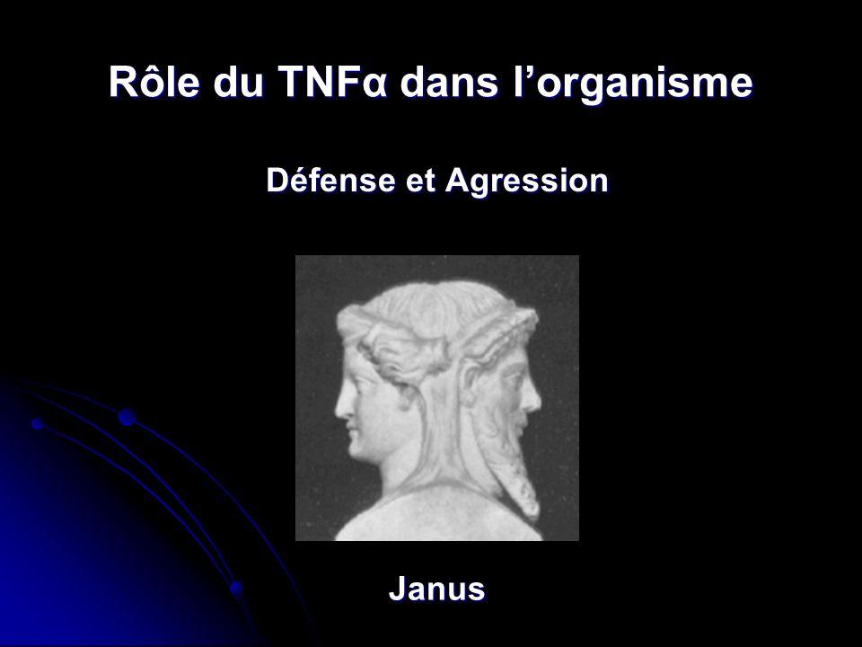 Rôle du TNFα dans l'organisme