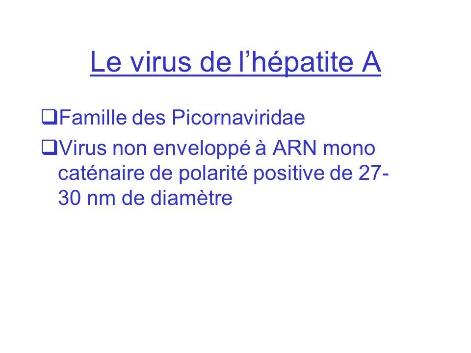 Le virus de l'hépatite A