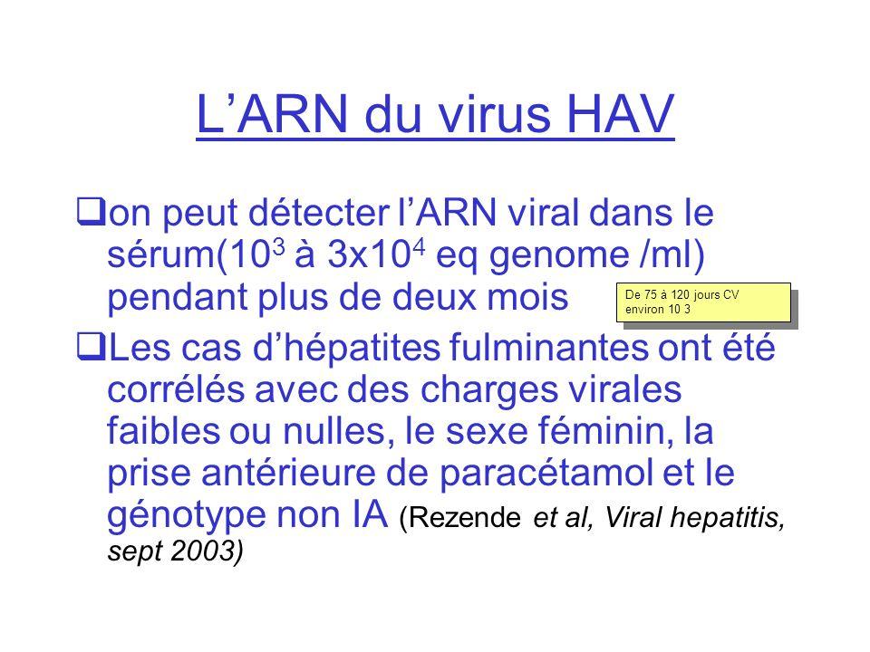 L'ARN du virus HAV on peut détecter l'ARN viral dans le sérum(103 à 3x104 eq genome /ml) pendant plus de deux mois.