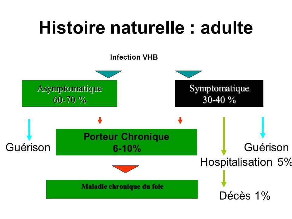 Histoire naturelle : adulte