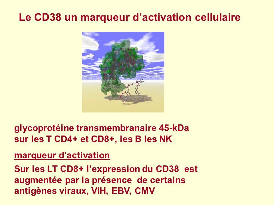 Le CD38 un marqueur d'activation cellulaire