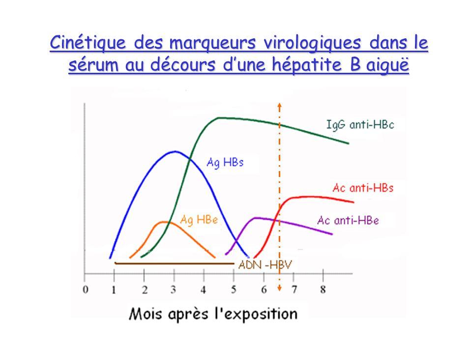 Cinétique des marqueurs virologiques dans le sérum au décours d'une hépatite B aiguë