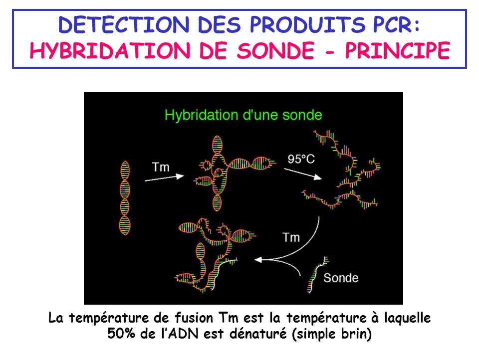 DETECTION DES PRODUITS PCR: HYBRIDATION DE SONDE - PRINCIPE