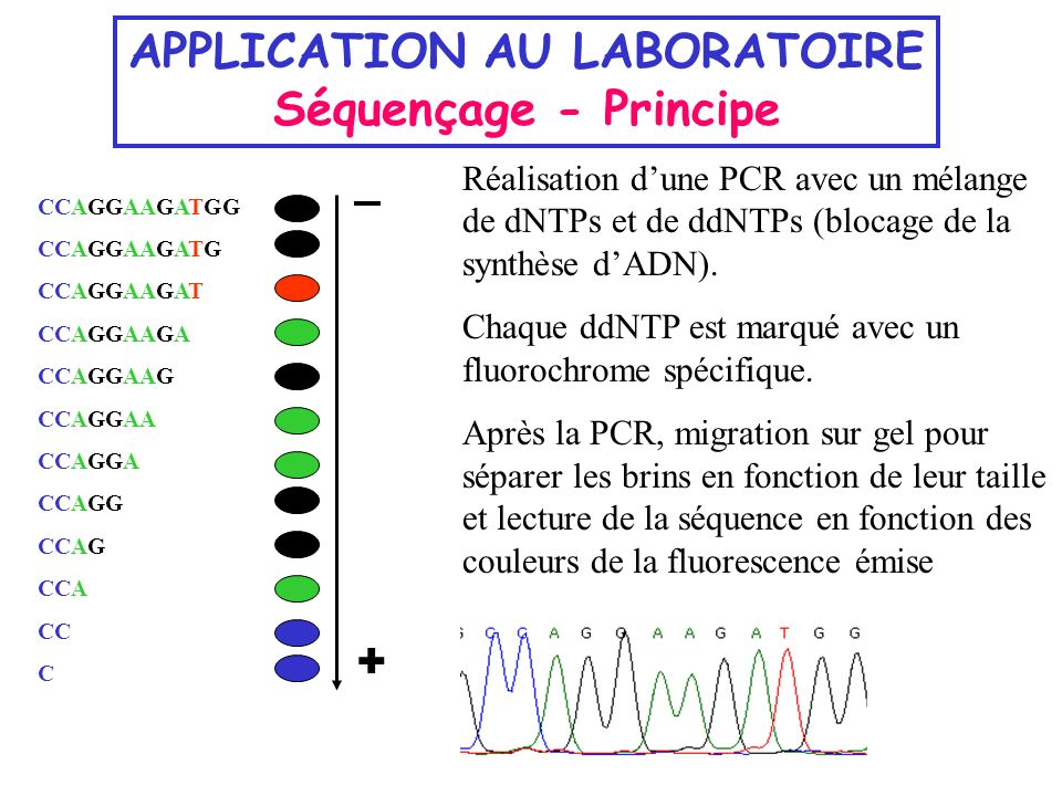 APPLICATION AU LABORATOIRE Séquençage - Principe