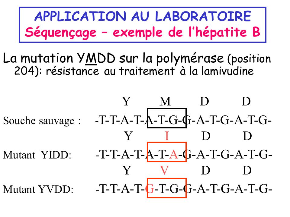 APPLICATION AU LABORATOIRE Séquençage – exemple de l'hépatite B
