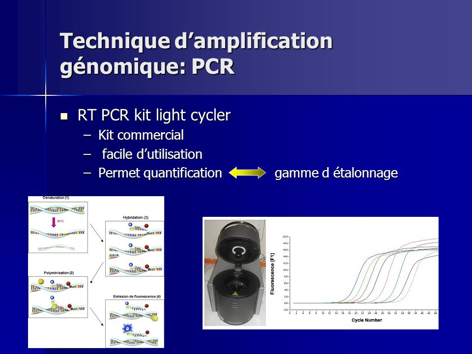 Technique d'amplification génomique: PCR