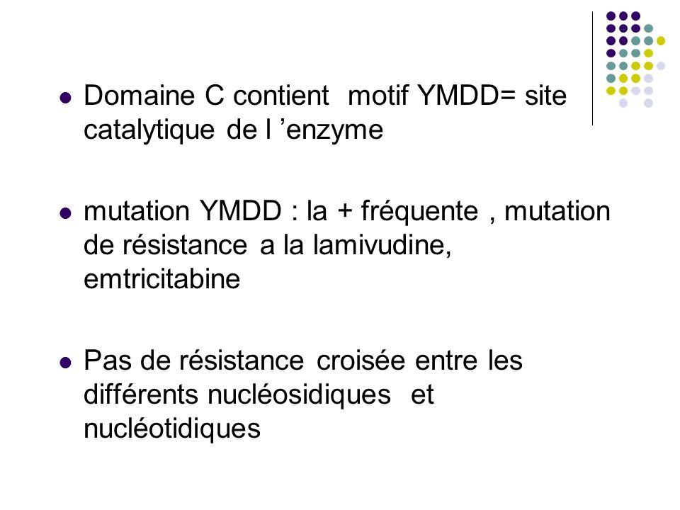 Domaine C contient motif YMDD= site catalytique de l 'enzyme
