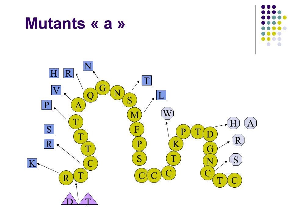 Mutants « a » N H R T G V N Q L S A P M W T H A F S P T D T R P K R T