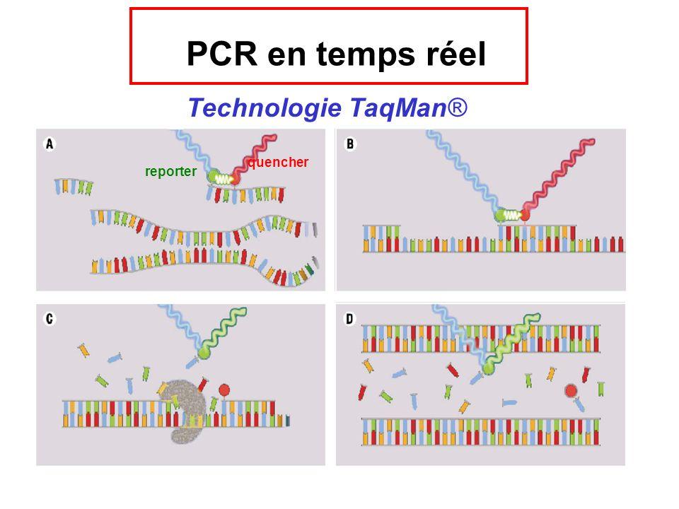 PCR en temps réel Technologie TaqMan® quencher reporter