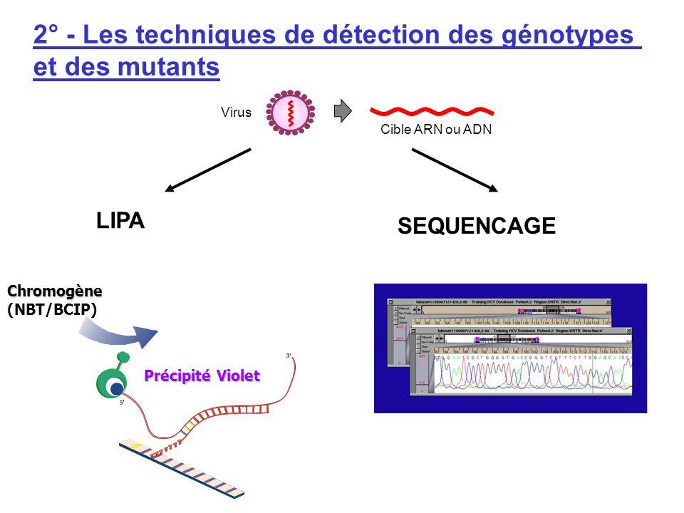 2° - Les techniques de détection des génotypes et des mutants