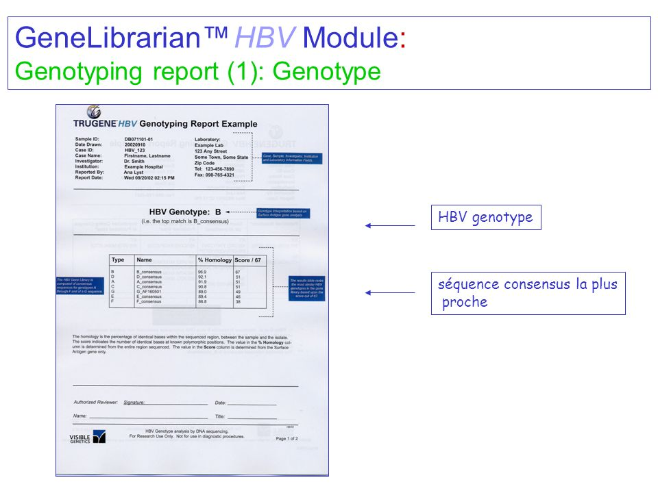 GeneLibrarian™ HBV Module: