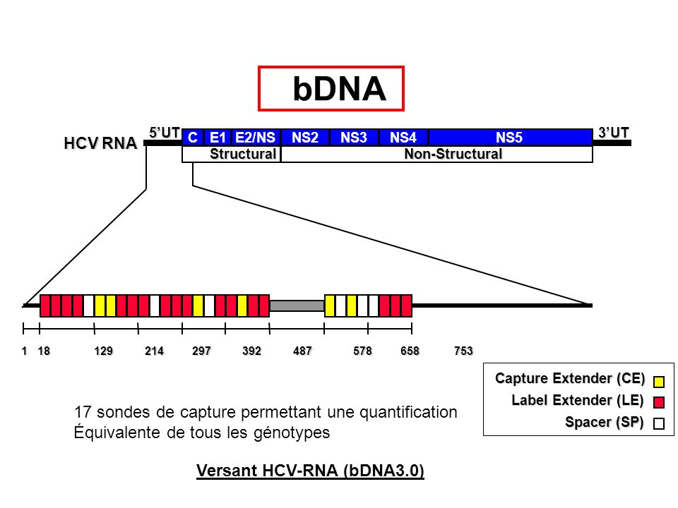bDNA 17 sondes de capture permettant une quantification