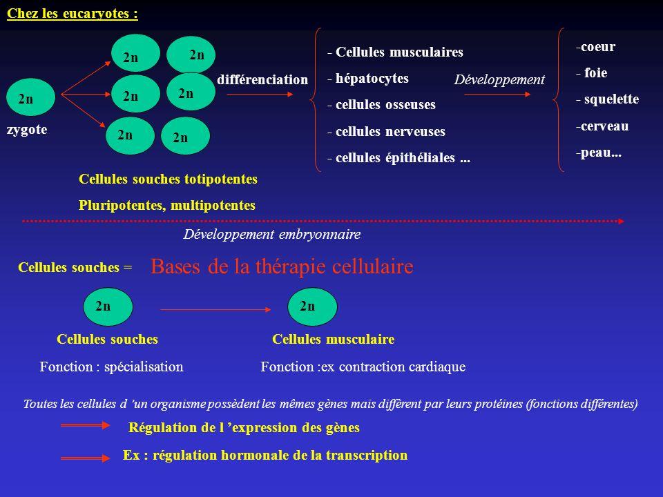 Bases de la thérapie cellulaire
