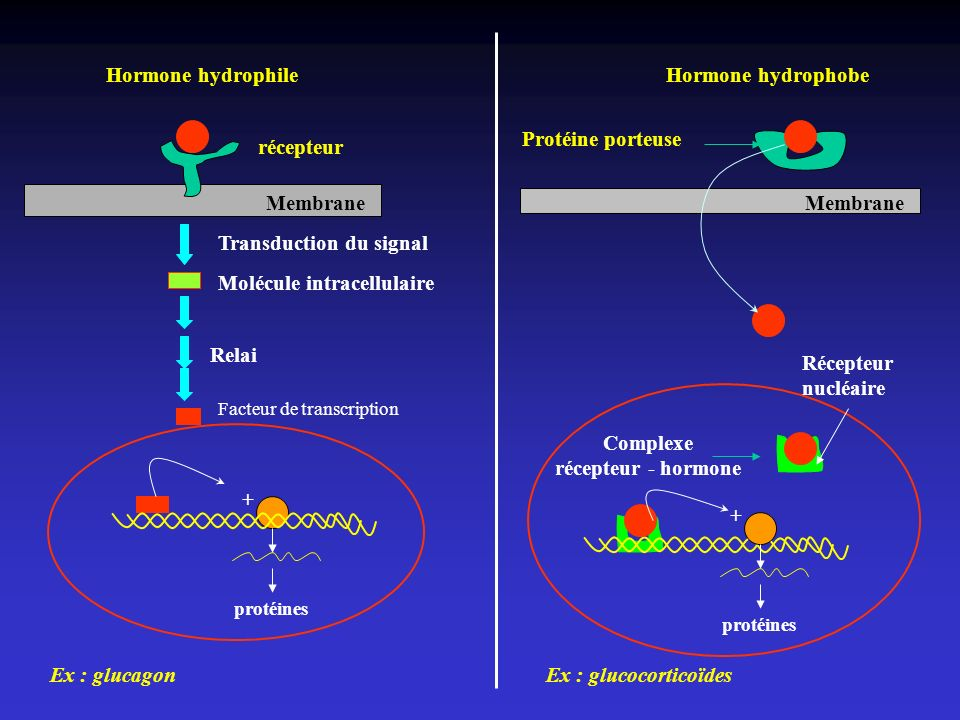 Complexe récepteur - hormone