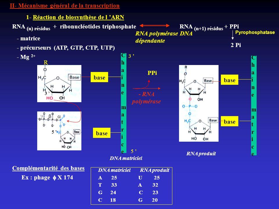 Chaîne matrice Chaîne matrice PPi base base - RNA polymérase base base