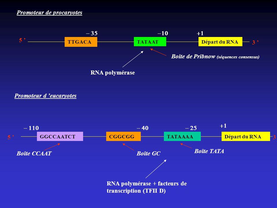Promoteur de procaryotes