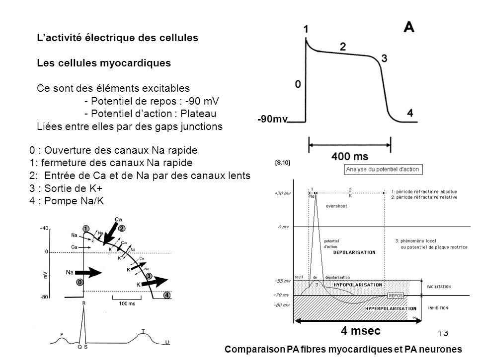 4 msec L'activité électrique des cellules Les cellules myocardiques