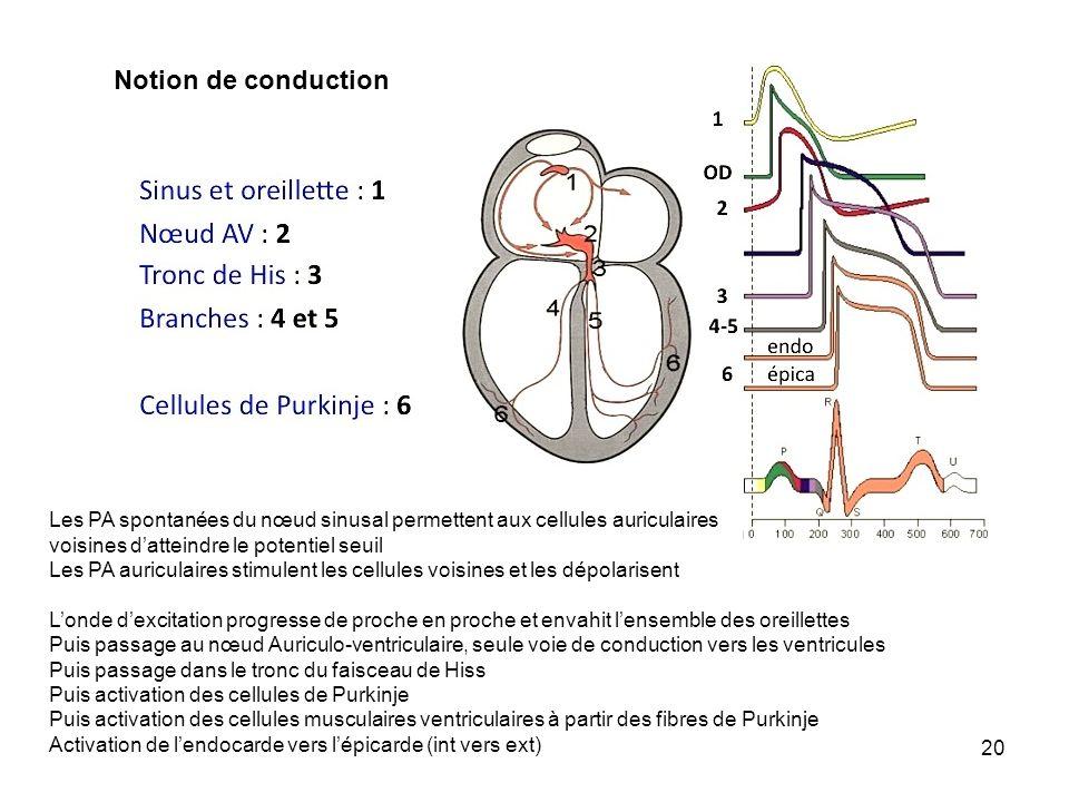 Notion de conductionLes PA spontanées du nœud sinusal permettent aux cellules auriculaires. voisines d'atteindre le potentiel seuil.
