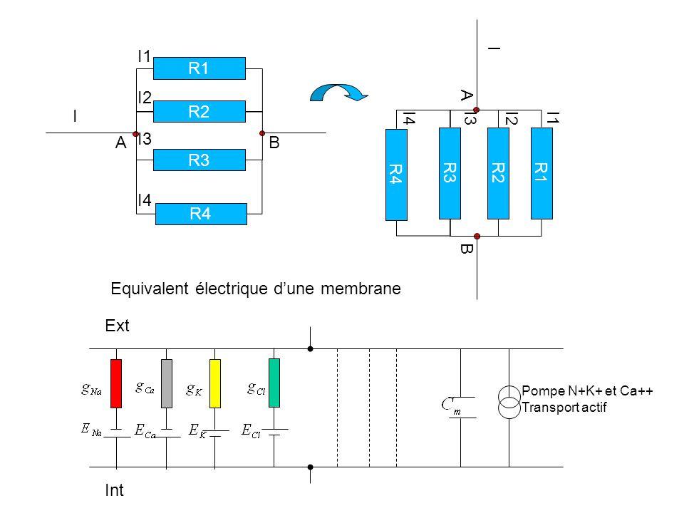 Equivalent électrique d'une membrane