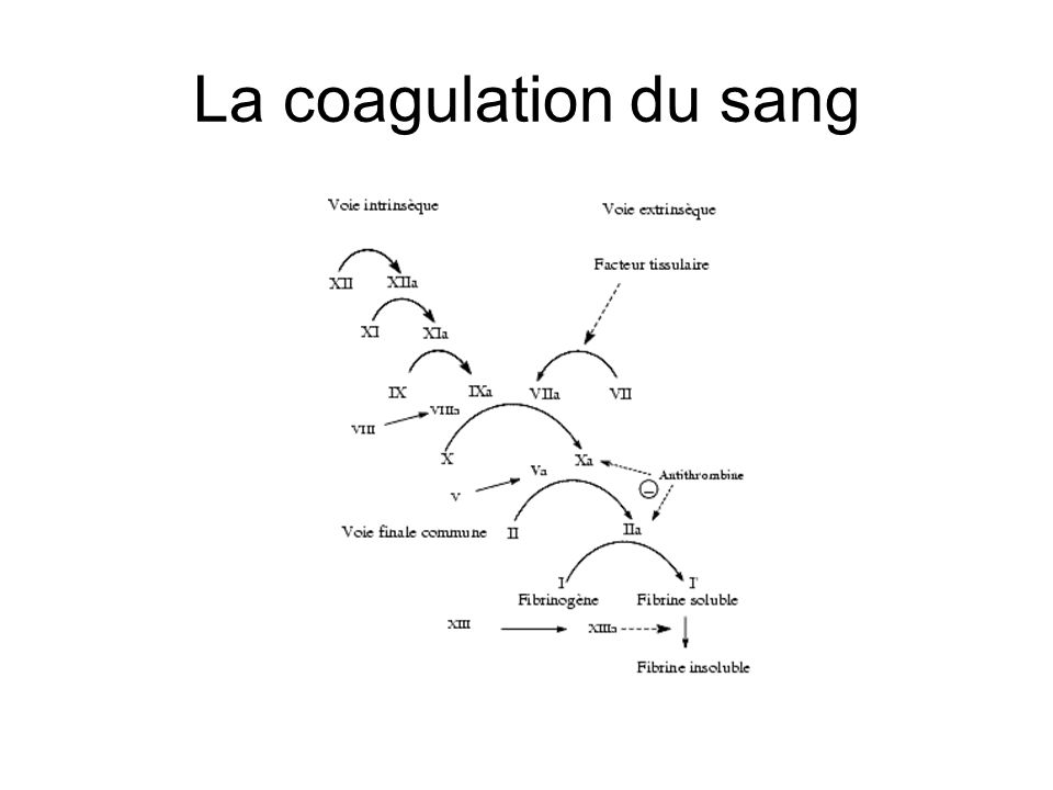 La coagulation du sang