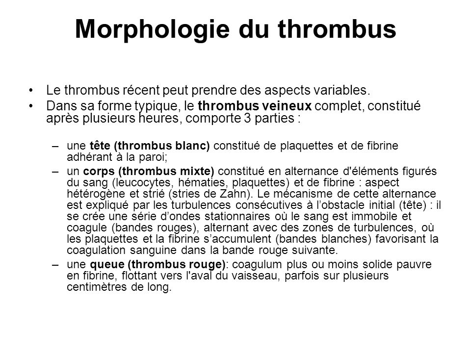 Morphologie du thrombus