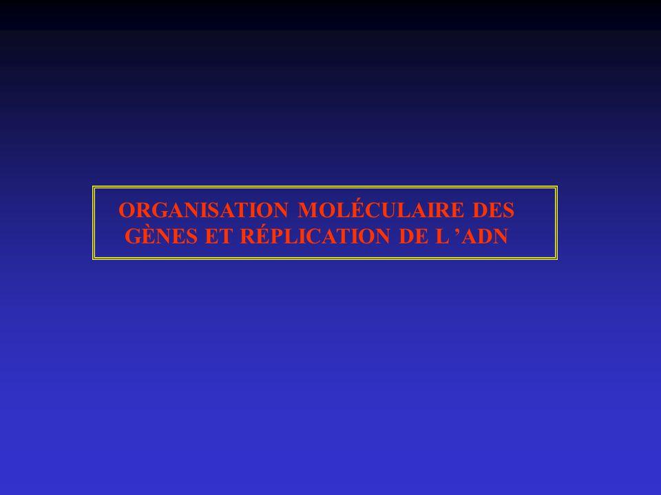 ORGANISATION MOLÉCULAIRE DES GÈNES ET RÉPLICATION DE L 'ADN