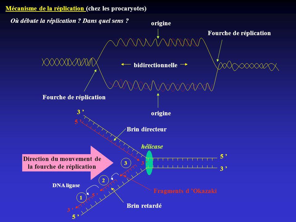 Direction du mouvement de la fourche de réplication