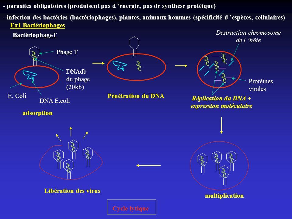 Réplication du DNA + expression moléculaire