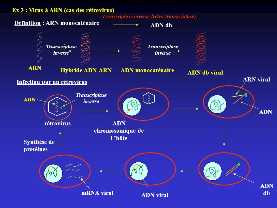 ADN chromosomique de l 'hôte ADN db